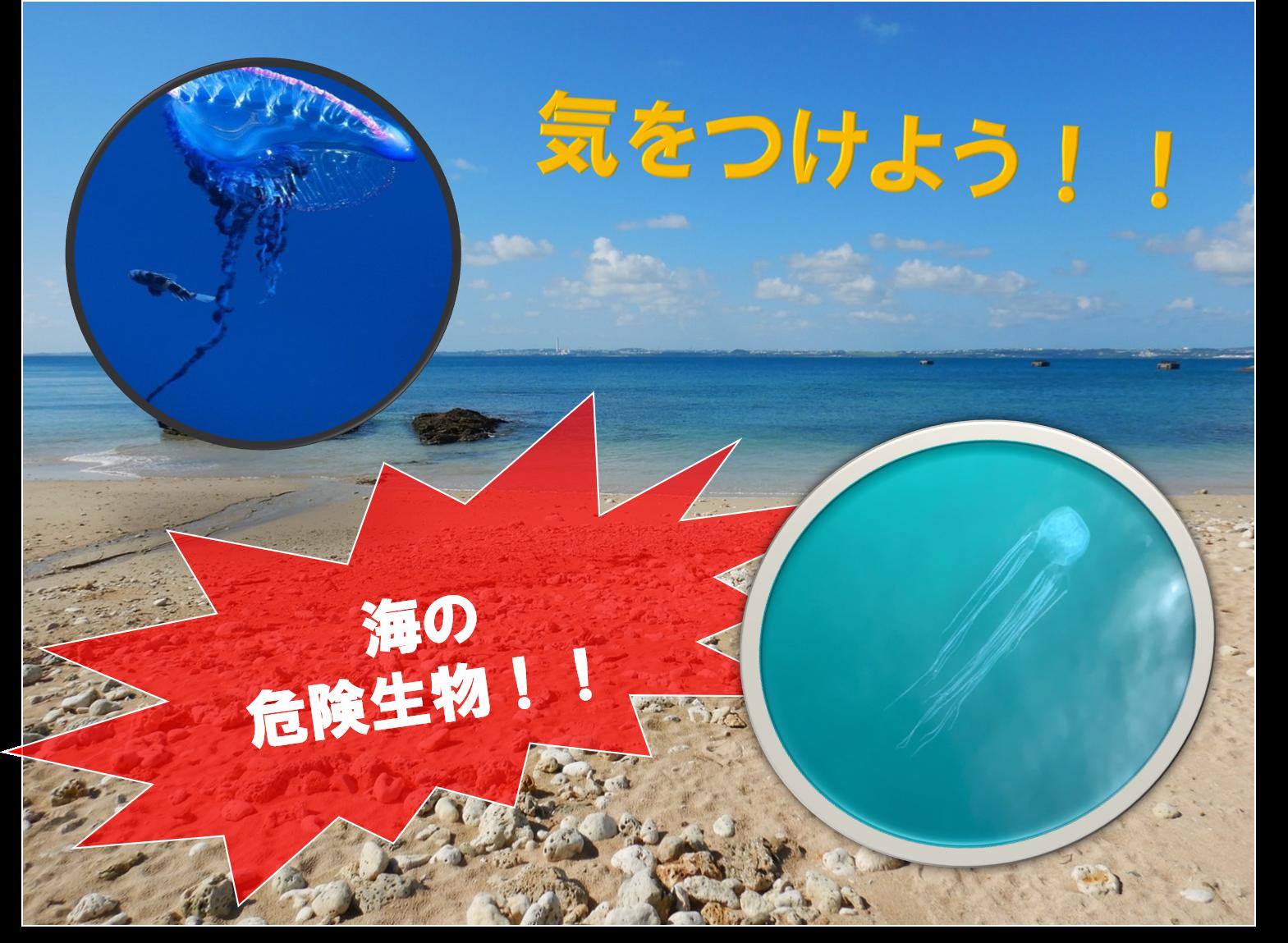 沖縄はまだ夏?気を付けなきゃいけないクラゲについて