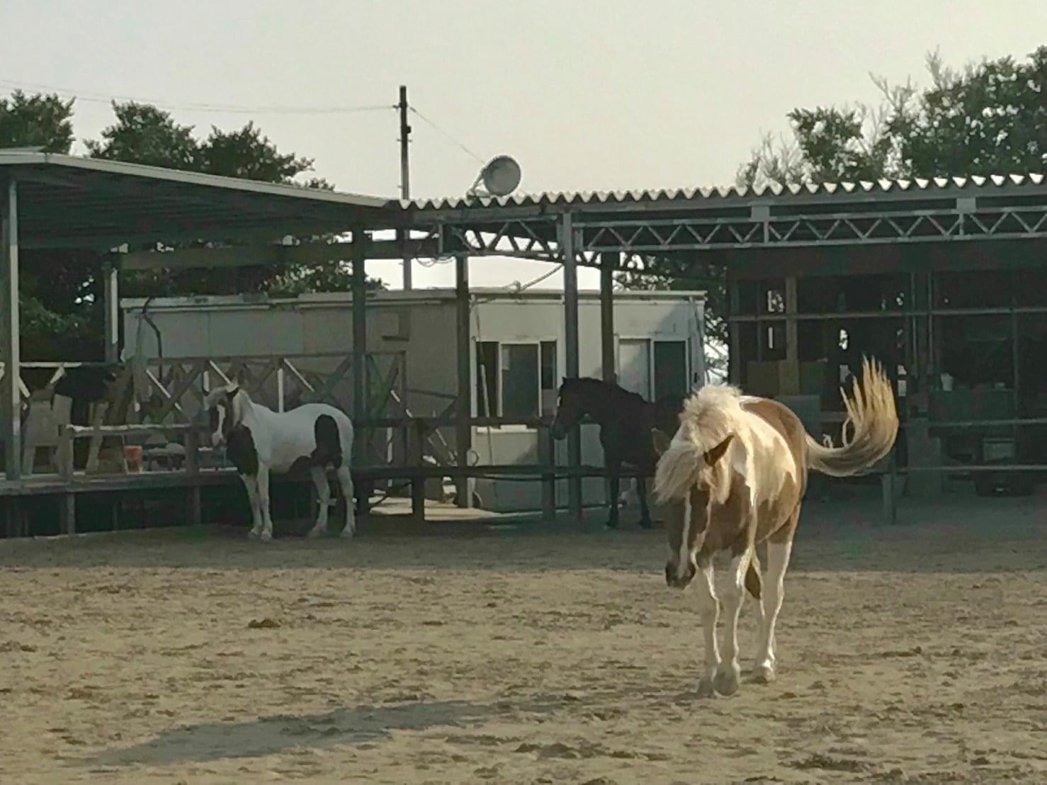 発達支援センター海馬 お馬さん